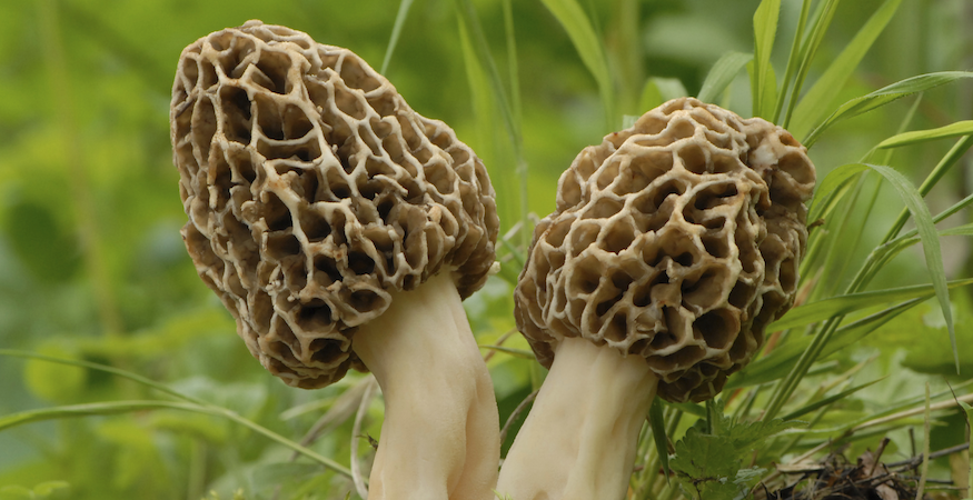 5 Morals to the Morel Mushroom Hunt